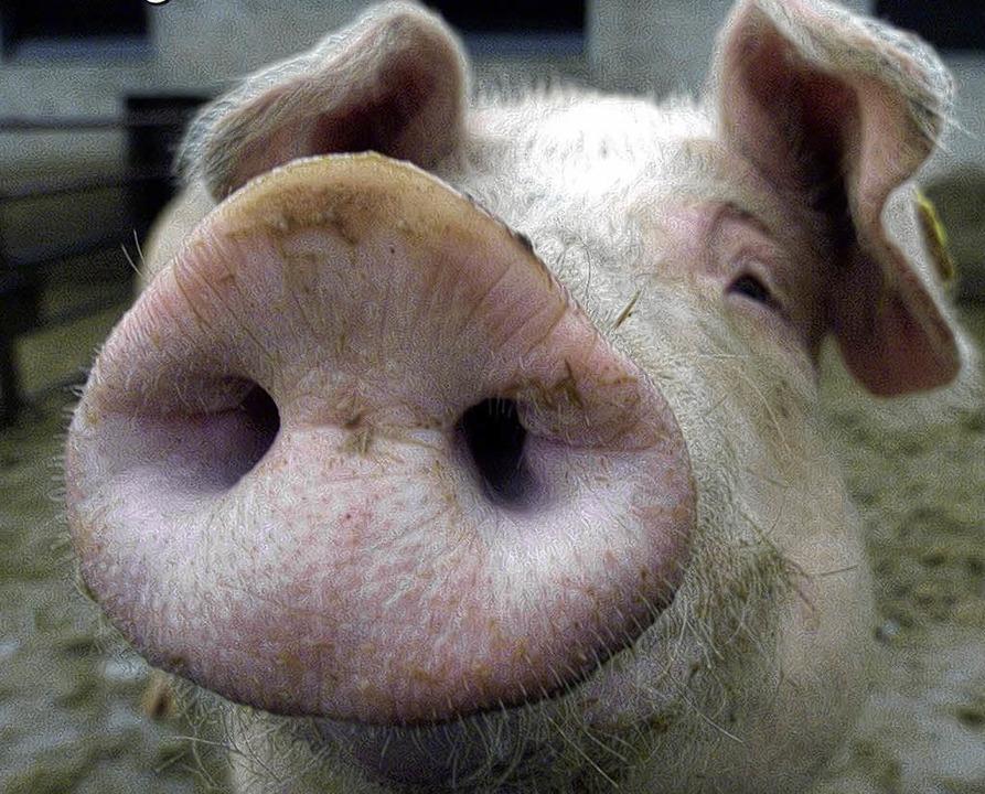 Glücksschwein, Sparschwein und Schweinehund – ein patentes Trio.  | Foto: Roland Weihrauch