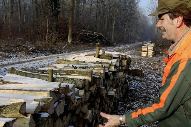 Brennholz-Boom im Merdinger Wald