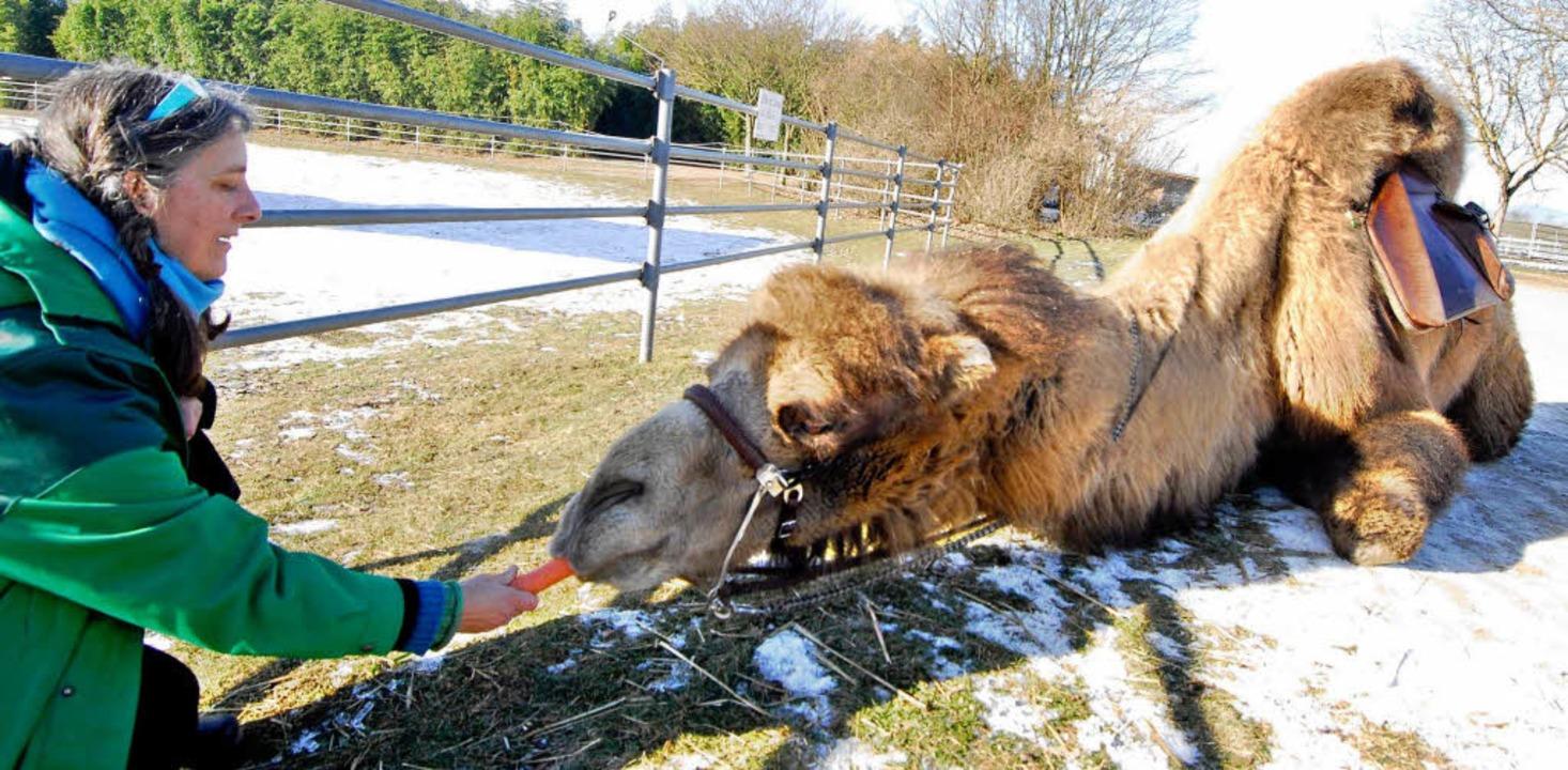 Danach gab es für das Kamel noch eine kleine Belohnung.  | Foto: Michael Bamberger