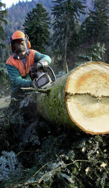 Im Wald von Kappel-Grafenhausen sind d...lz wird aufbereitet und weggeschafft.   | Foto: Erika Sieberts