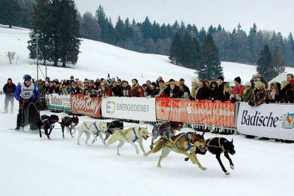 Internationales Schlittenhunderennen 2009 in Bernau. (Foto: Horst A. Böß)