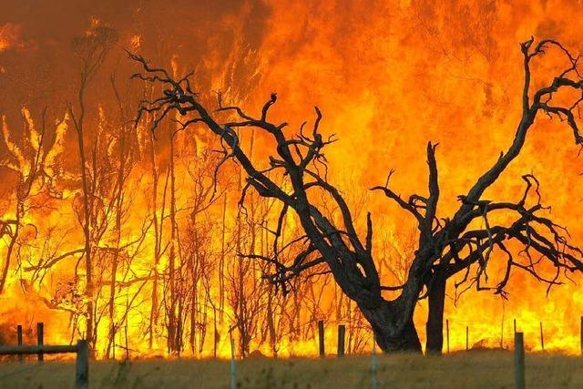Brände in Australien: Die Opferzahl steigt