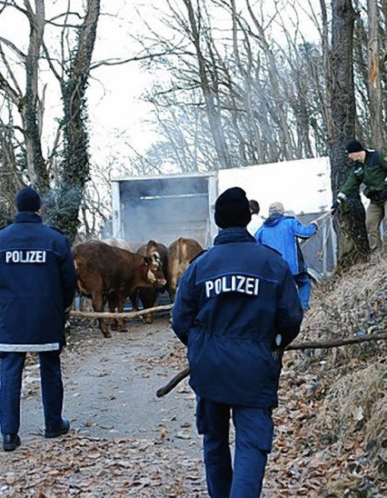 Polizei war im Einsatz, um entlaufene Rinder einzufangen.   | Foto: Polizei