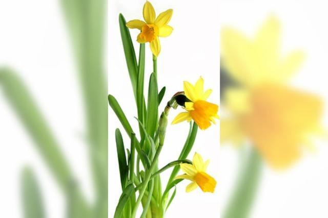 Auf in den vorgezogenen Frühling!