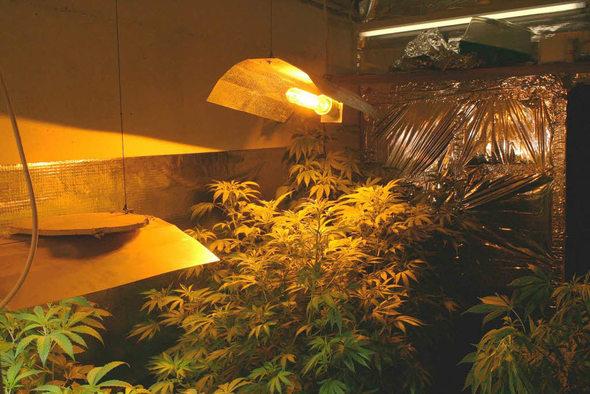 emmendingen cannabis anbau vor gericht ermittlerpanne f hrt zum freispruch badische. Black Bedroom Furniture Sets. Home Design Ideas