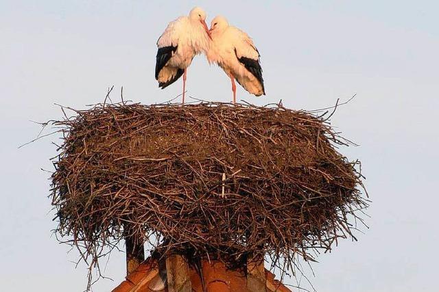 Das Storchenpaar ist wieder da!