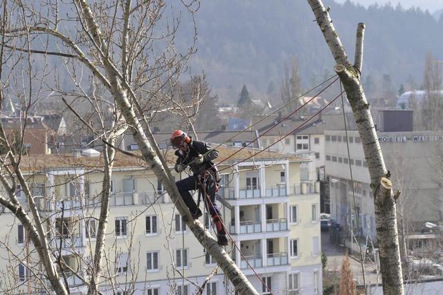 Vier Bäume an der von-Stephan-Straße müssen weichen