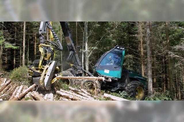 Gewinn aus Gemeindewald