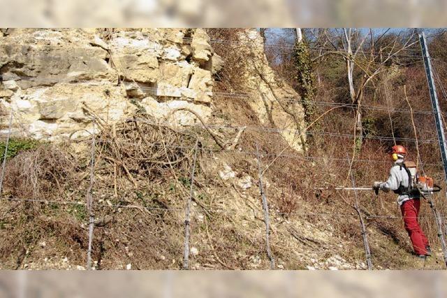 Ein Fels für manches Getier