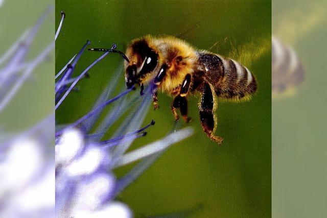 Einblicke in Welt der Insekten
