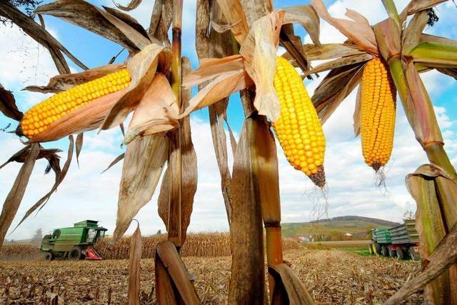 Die Getreidepreise sind im Keller