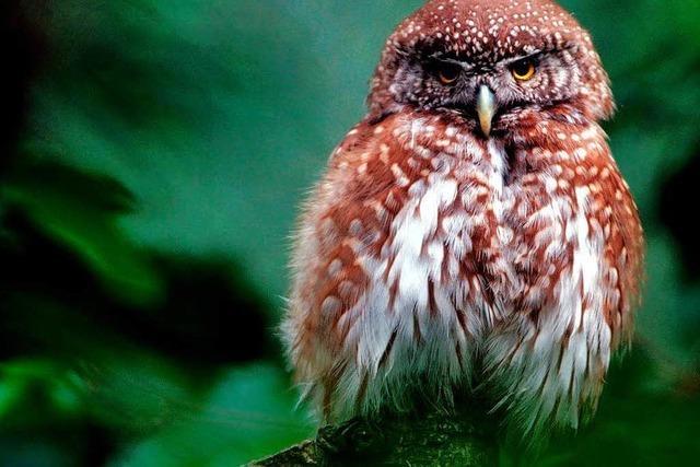 Naturschützer zeigen Langläufern den Vogel