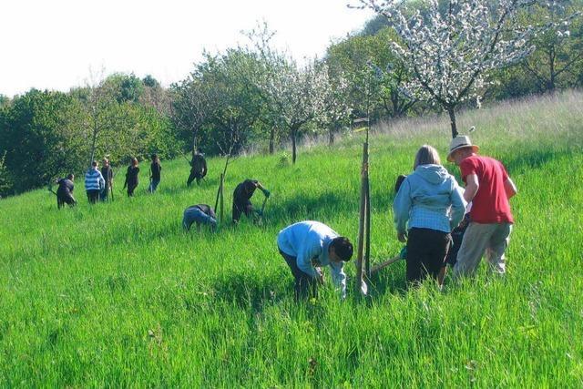 Natura 2000 – was geht am Tüllinger?