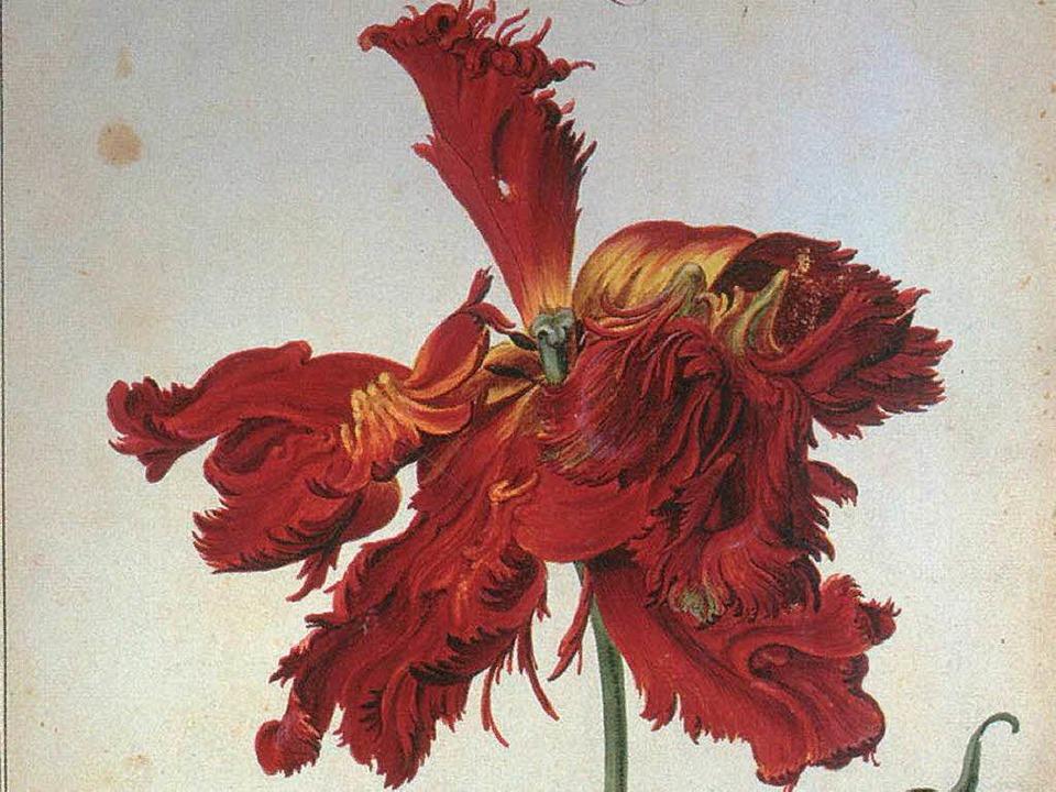 Aquarell aus einem der vier Karlsruher Tulpenbücher   | Foto: bz