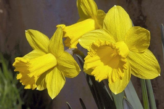 AM RANDE: Frühlingsboten allenthalben