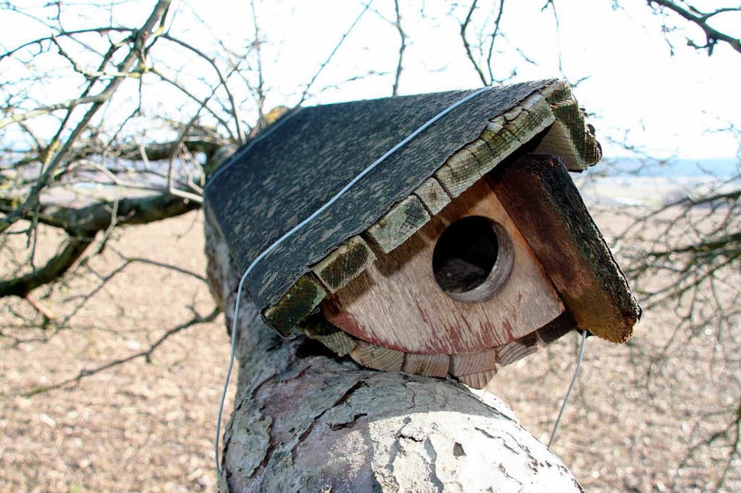 Brutröhre auf dem Aste eines alten Apfelbaumes  | Foto: Silvia Faller