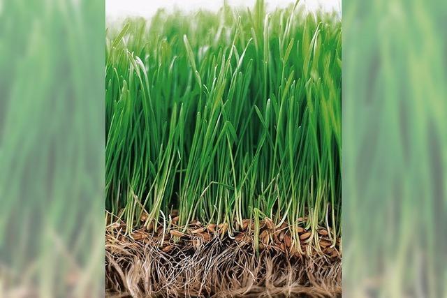 RASEN: Damit das Grün bleib t