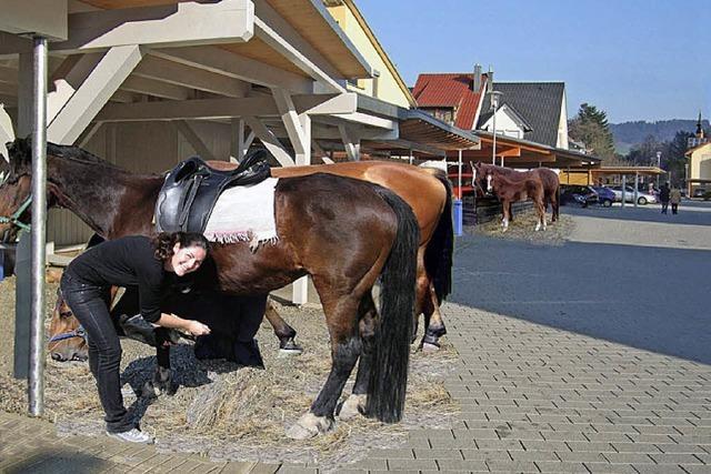 Pferdestärken statt Kilowatt im Rosengarten