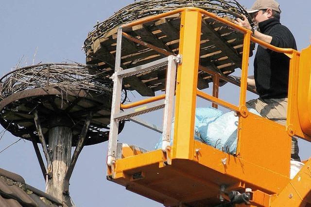 Ein größeres Nest für Störche