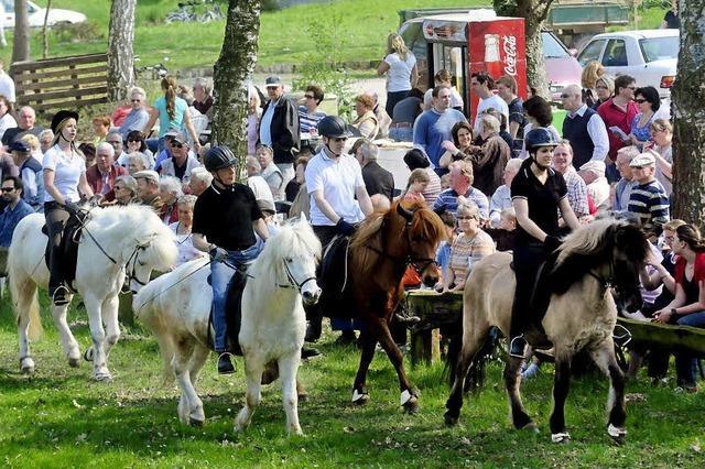 Ponys und Rösser traben zur Schau