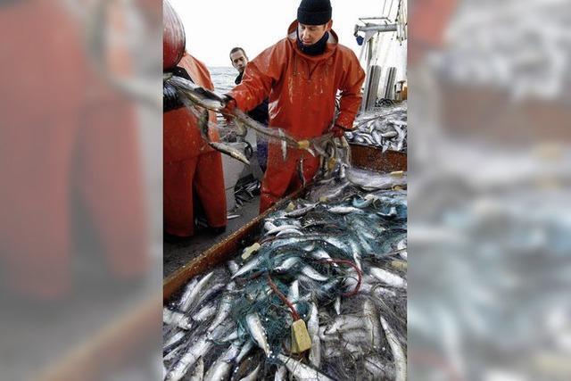 EU will die Fische retten