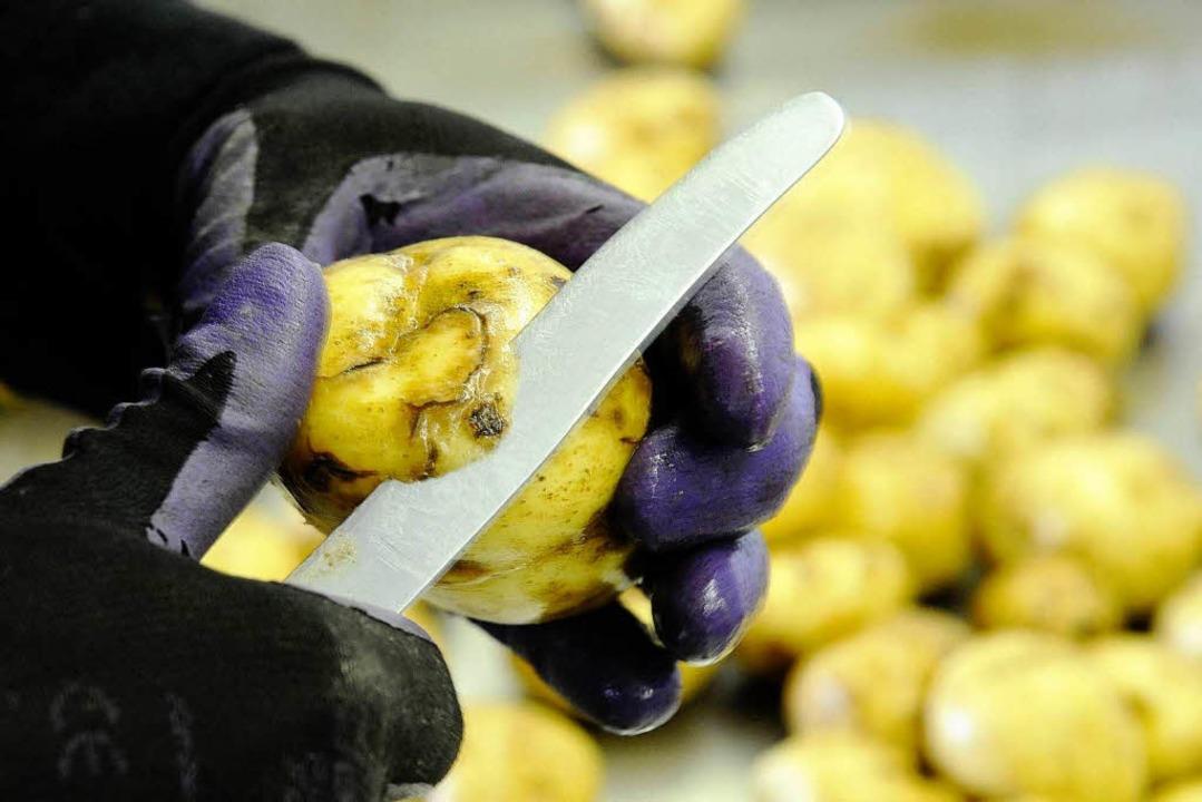 Diese Kartoffeln sind nicht genmanipul...kommen aber Konkurrenz- durch Amflora.  | Foto: ddp