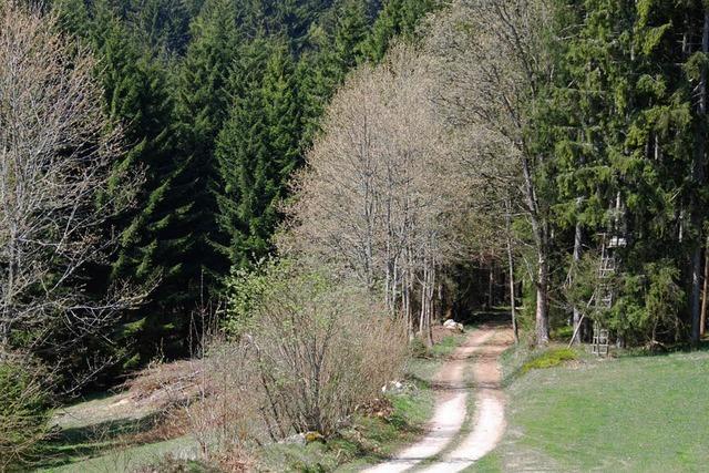 Hoher Gewinn aus Waldwirtschaft