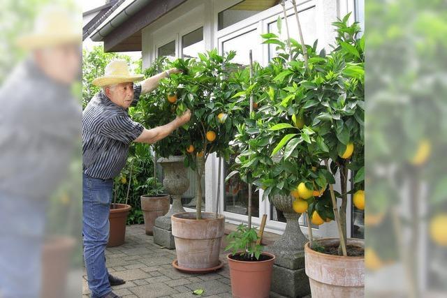 Orangen aus Langenau