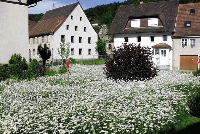 Blütenmeer mitten im Dorf zieht die Blicke auf sich