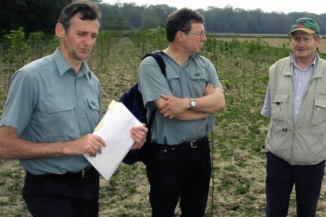 Ersatzwald für Rohrlache