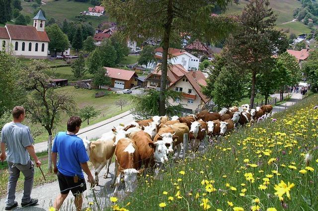 Sommerfrische fürs Vieh