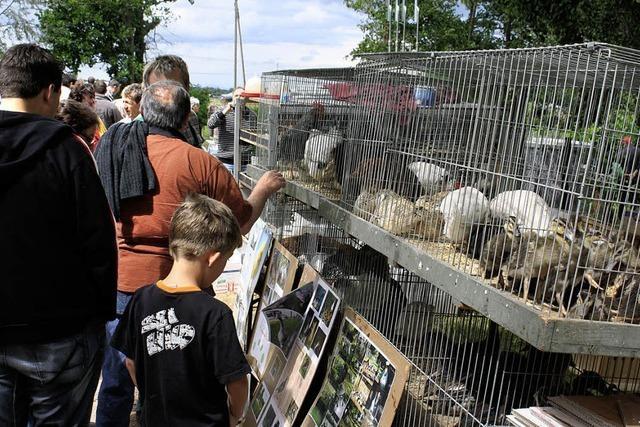 Beliebter Treffpunkt für Tierfreunde