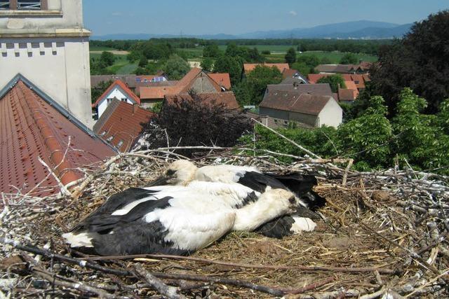 Ein Nest in luftiger Höhe