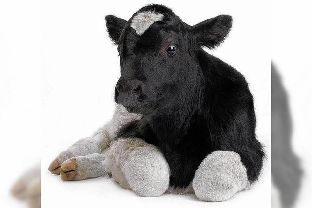 EU-Agrarminister beschließen Regeln für Klonfleisch