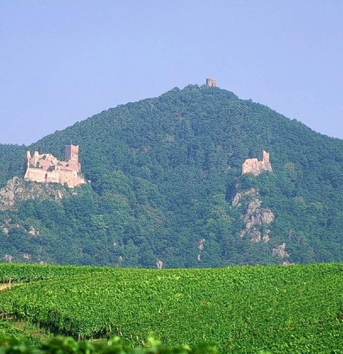 Stolz thronen die St. Ulrichsburg (lin...nden lassen sich die Burgen erwandern.    Foto: ADT Haute-Alsac
