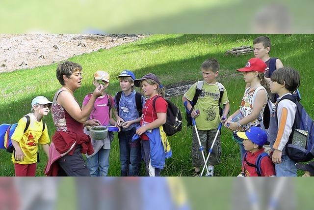 Schüler entdecken Wiesen und was in ihnen lebt