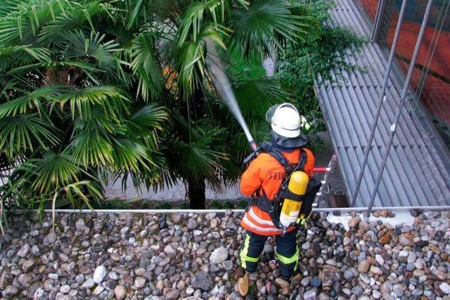 Feuerwehr löscht Palmen vor Kurhaus