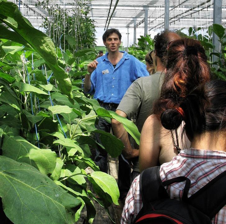 Gurke, Aubergine, Tomate:  Richard  Sp...rmierte über den ökologischen Anbau.    | Foto: k. mEyer