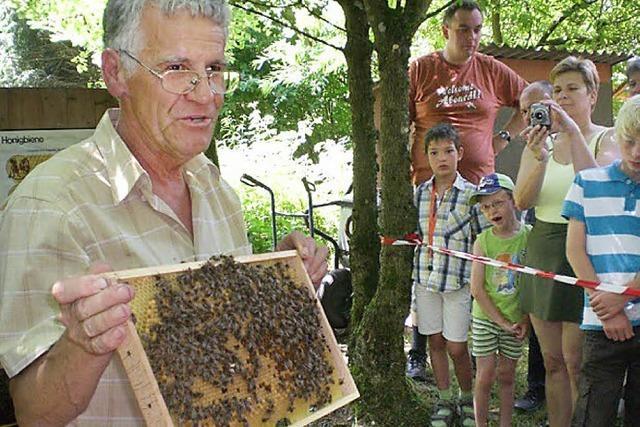 Allesss Wissssssensssswerte zur Biene