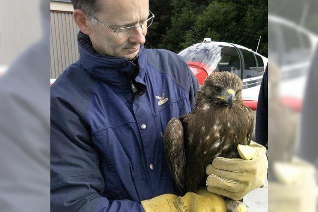 Hilfe für verletzten Adler