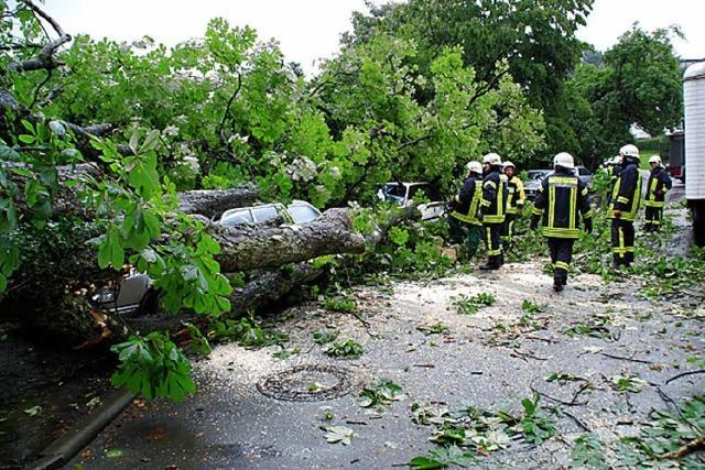 Feuerwehreinsatz wegen umgestürzter Bäume