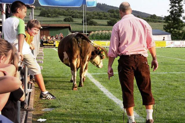 Kuh Emma fungiert als Glücksfee