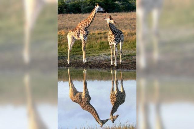 Heile Tierwelt für die Urlauber