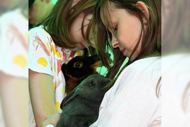 Kaninchen auf dem Catwalk