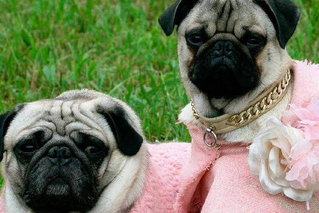 Die Luxusbranche ist auf den Hund gekommen