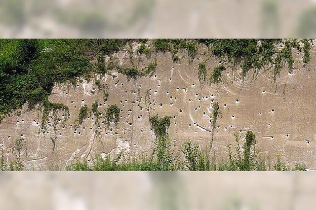 Die Schwalben fliegen auf Bahn 17