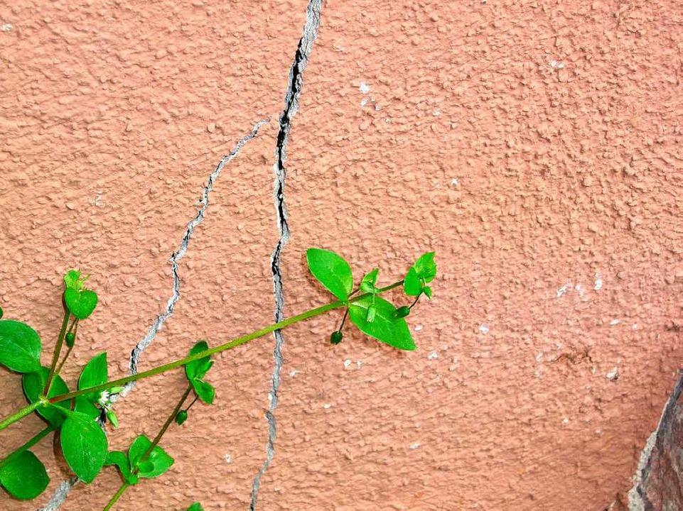 Hauptstraße 53    Foto: Birgit Fritz