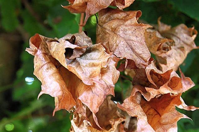 ALBGEFLÜSTER: Verfrühter Herbst