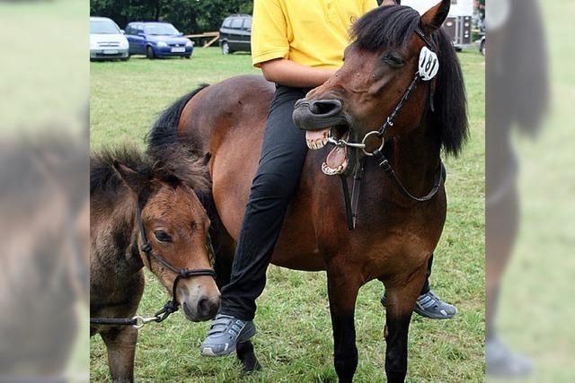 GANZ NEBENBEI: Da lacht das Pferd