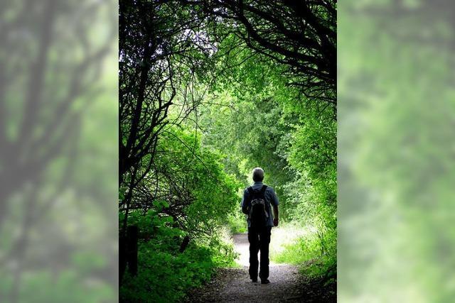 BZ-SOMMERQUIZ: Der Wald ist wichtig fürs Klima